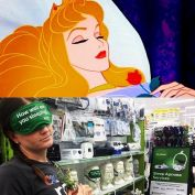 Do you or someone you know struggle with sleep apnoea?  Sleep like sleeping beauty from the help of  the C-PAP trained professionals from Blooms the Chemist in Camden.  Visit bloomscpapclinic.com.au for more information.  #offeringdiscounts #onlinepricing #cpap #sleepapnoea #bloomsthechemist #sleepingbeauty #sleepy #princess #c913 #c913roadcrew #elephant #elephanttrunk